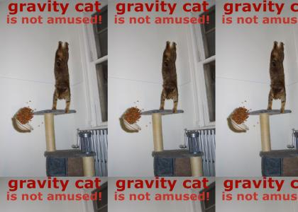 Gravity Cat Not Amused v1.0