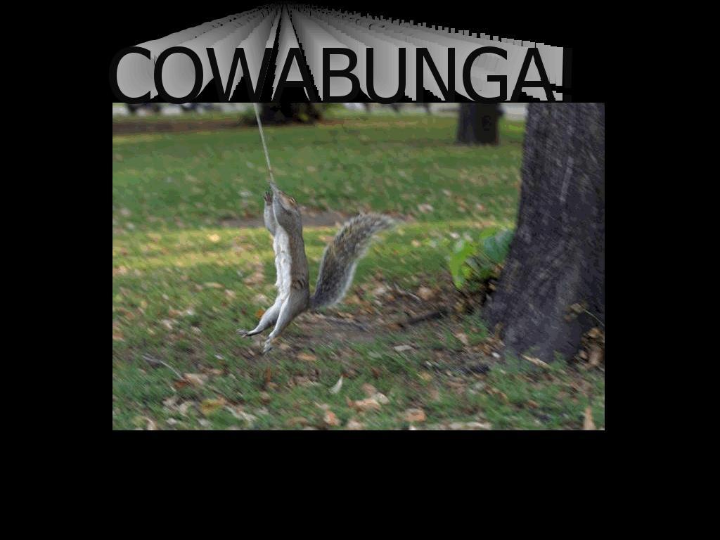 tmnsquirrels