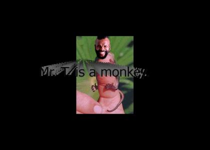 Mr. T is a monkey