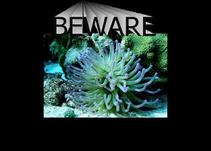 Beware the Sea Anenemone!