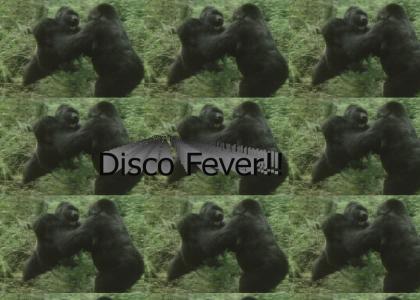 Gorilla Disco Party