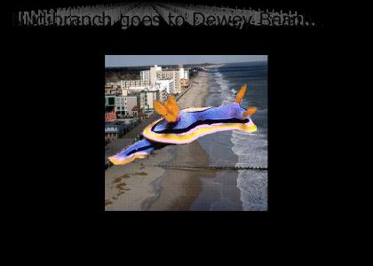 Nudibranch Goes to Dewey Beach
