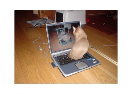 Aperture Science Portal Cat!