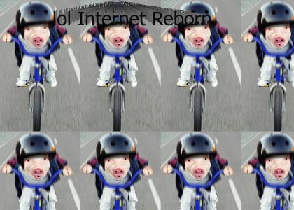 lol Internet Pig