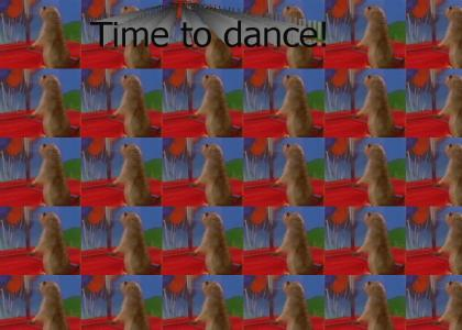 Dancing Prairie Dog