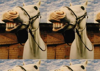 Killer Horses