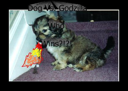 DogVsGodzilla