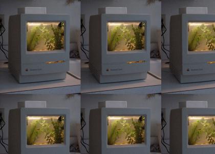 Macintosh Aquarium