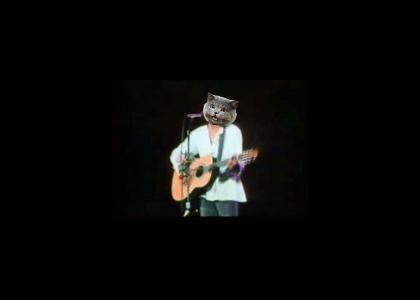 Cat Stevens sings a hit