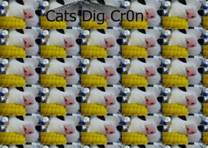 Cats Dig Corn!