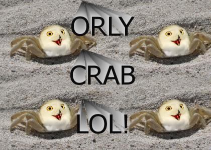 OMG THE ORLY CRAB!!!