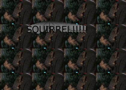 SQUIRREL!!!!!!!!!!!!!!!!!!!!!!