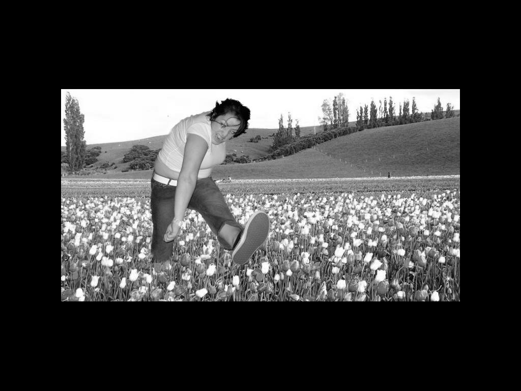 tulipmosh