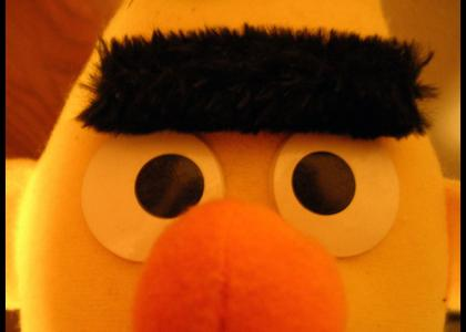Bert stares into your soul...