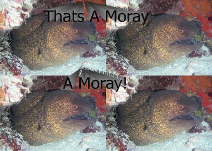 Thats a Moray