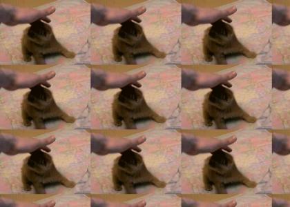 Do a Kitten Roll!