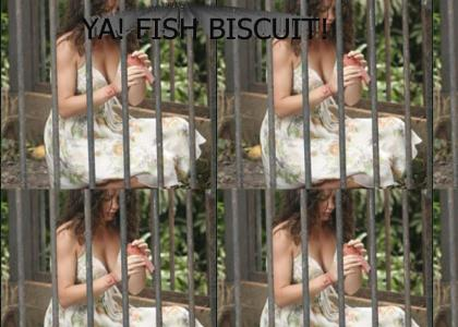 Fish Biscuit