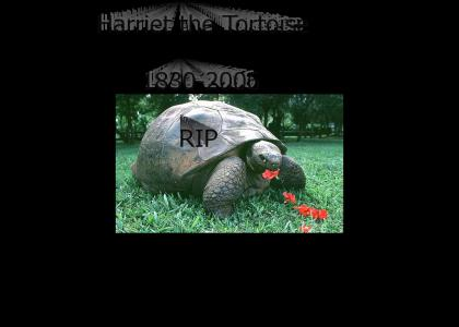 RIP Harriet the Tortoise