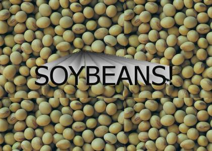 SOYBEANS!