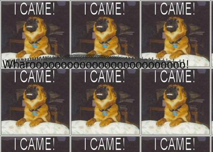 Dogasmic Dog Dogasms