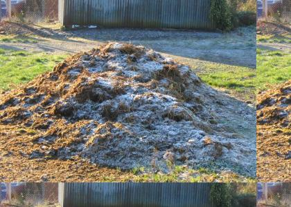 Epic cow manure