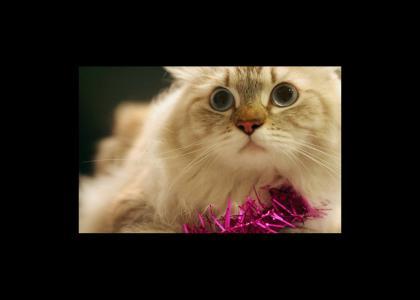 SHOCKING CATS