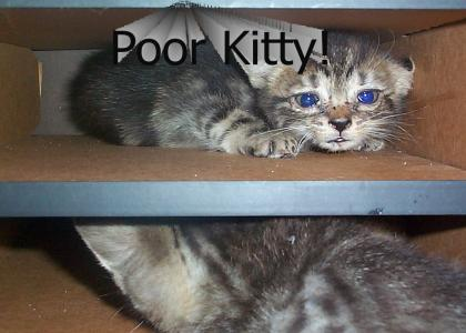 Kitty Slave Trade