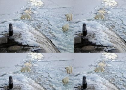 Polar Bears don't yield for Anything