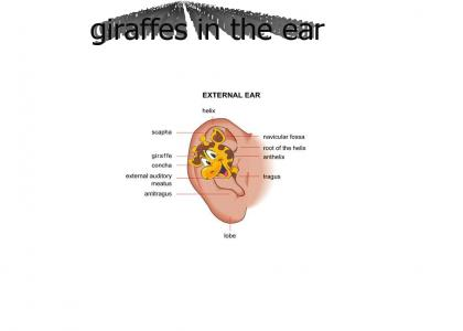 Giraffes in the Ear