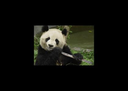 Panda Flute Beatbox!