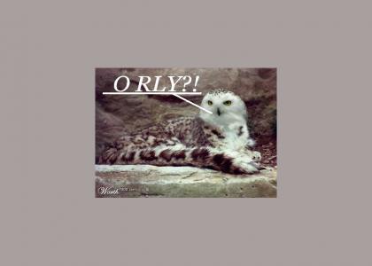 O RLY CAT!>!