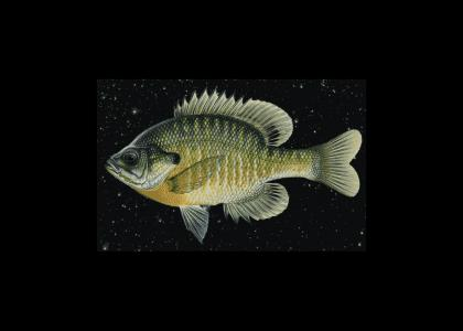 spacefish