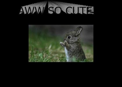More cuter than that cutest bunny ever