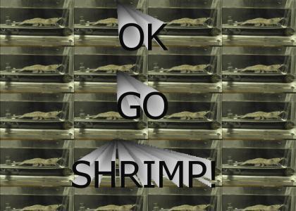 Ok, go shrimp!