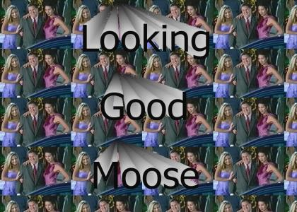 Looking Good Moose