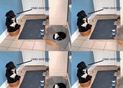 Pwned n00b dog