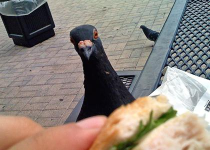 (`>  The Birds 3: I Can Has Sammich?  <*)