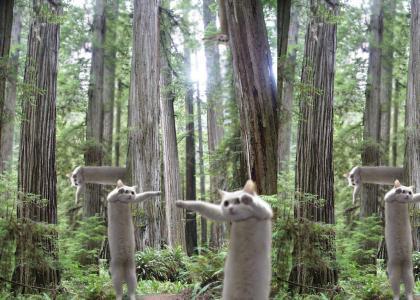 Longcats in the Wild
