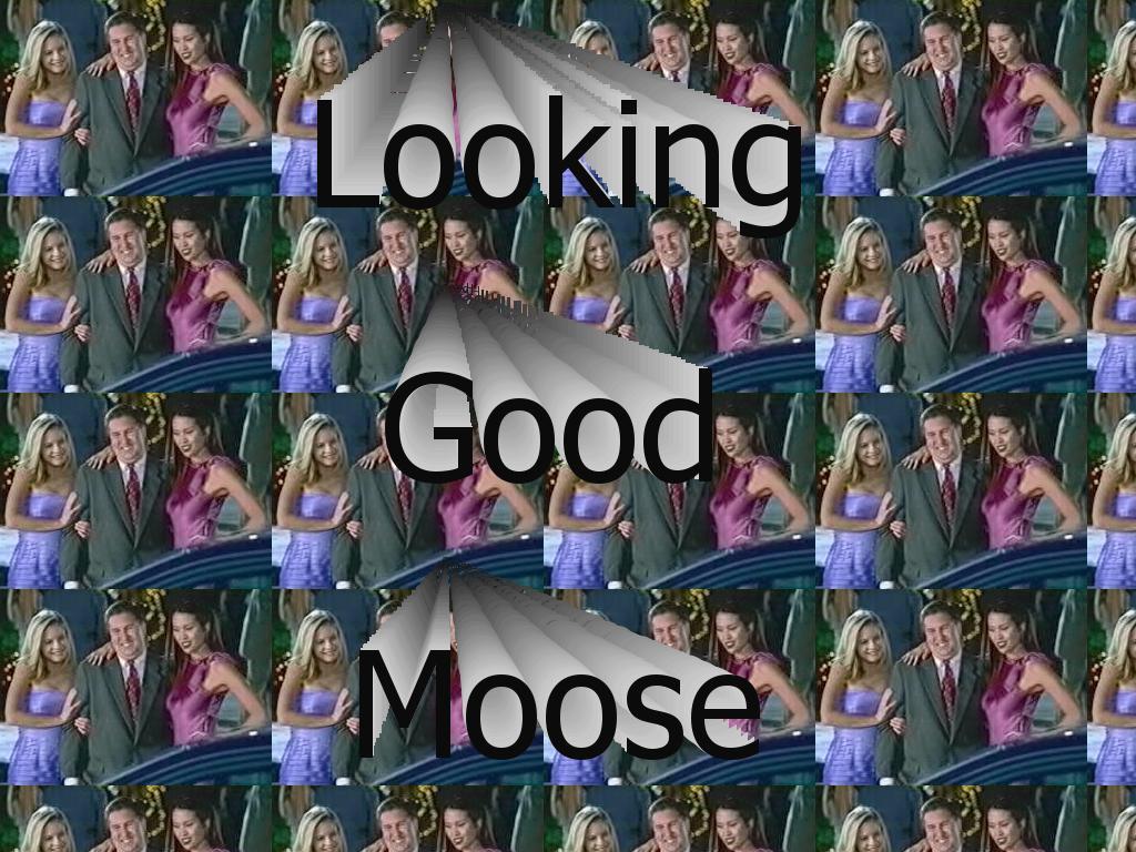 lookinggoodmoose
