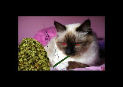 (nsfw) Pussy Marijuana