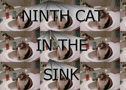 NINTH CAT IN THE SINK