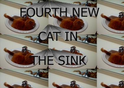 FOURTH NEW CAT IN THE SINK