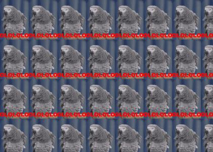 Parrot LOL!!1