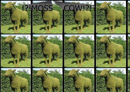 moss cow!?!