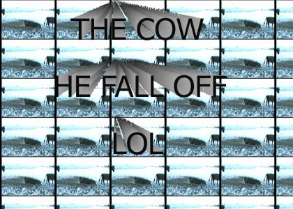 the cow, he fall off, LOL