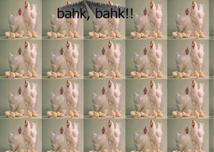 Chicken Groove