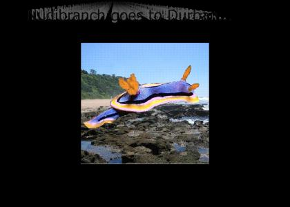 Nudibranch Goes to Durban
