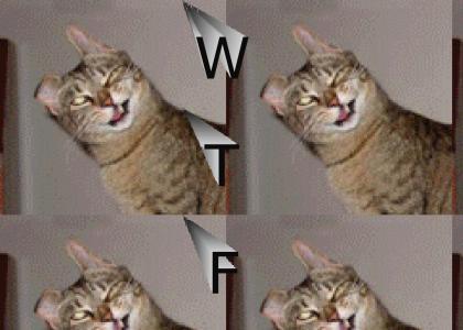 Wtfcat ftw