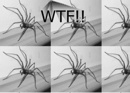 super spider (pimping new music)