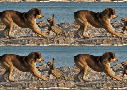 Epic Mountain Lion